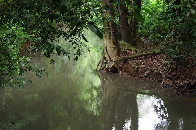 Crique Tortue en amont de Saut Athanase, 6 novembre 2012. Photo : J.-M. Gayman