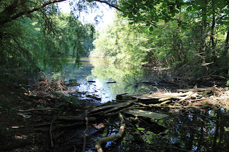 Photo: Ryvangens Naturpark