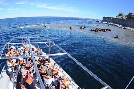 Paseo Nautico a la loberia de Punta Pirámides