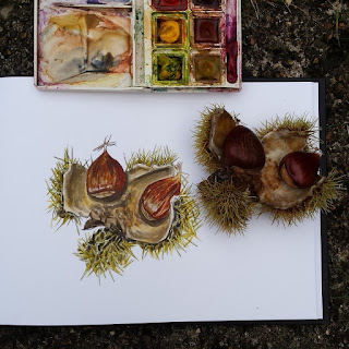 Chestnut illustration by Alice Draws The Line