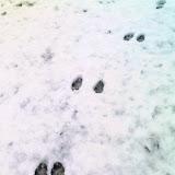 雪、猫のあしあと