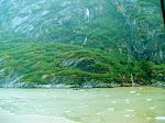 Endicot Arm - Dawes Glacier -  8-17-2009 4-46-10 PM.JPG