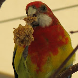 Birds of the Outback - img_1473.jpg