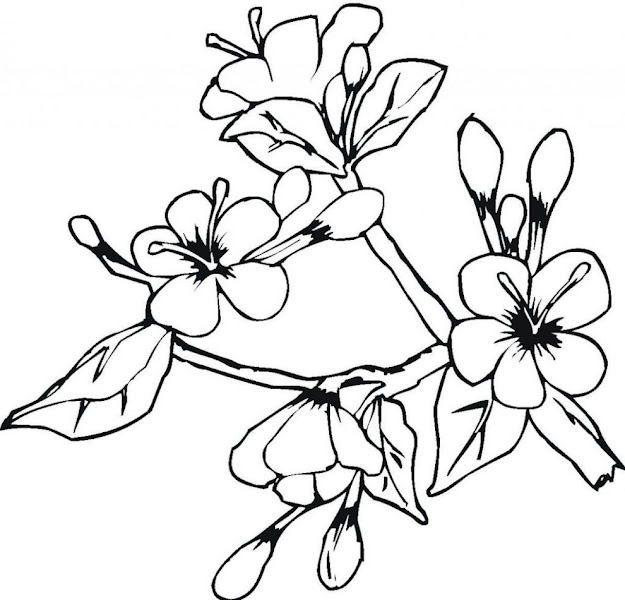 Big Flower Coloring Pages Auromas Inside Big Flower Coloring Pages  Regarding Your Own Home