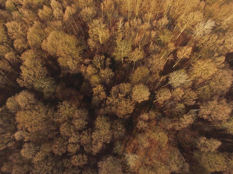 Meerdael Forest