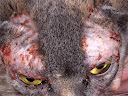 аллергия у кошек на корм