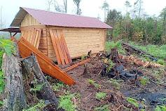 Illegal Logging di Hutan Produksi Dairi Masih Terus Berlangsung!