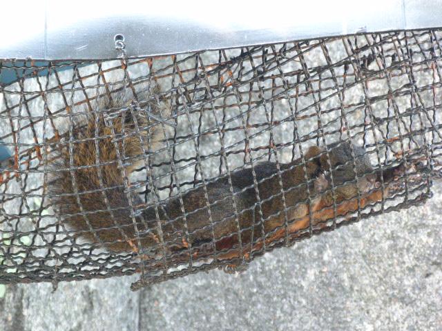 les écureuils se balladent dans un long corridor