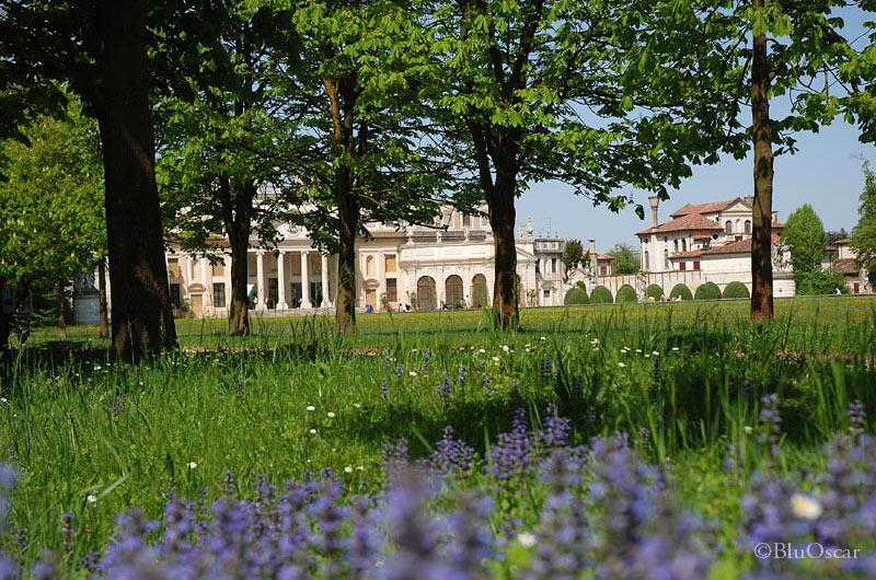 Villa Pisani 81