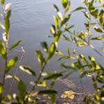 20140718_Fishing_Lysyn_008.jpg