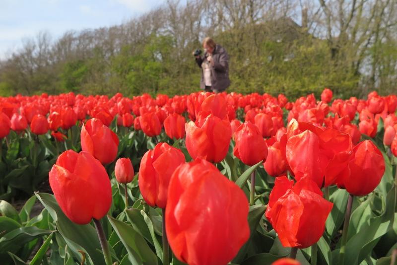 Weekend Noord Holland 2016 - IMG_6672_800x534.JPG