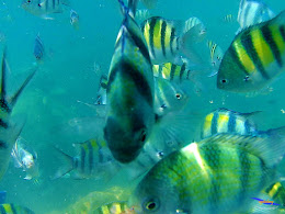 pulau harapan, 5-6 september 2015 skc 008