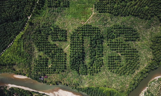 Dramatically carved into the landscape of a Sumatran oil palm plantation that borders one of the world's most unique rainforests are three ominous letters: SOS. The message by artist Ernest Zacharevic, cut into a Sumatran oil palm plantation that has been bought up by the Sumatran Orangutan Society to be reforested. Photo: Ernest Zacharevic / Cover Images