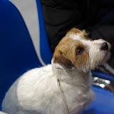 Międzynarodowa Wystawa psów - RZESZÓW 2011