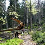 25. V Sinevirskom lese.JPG