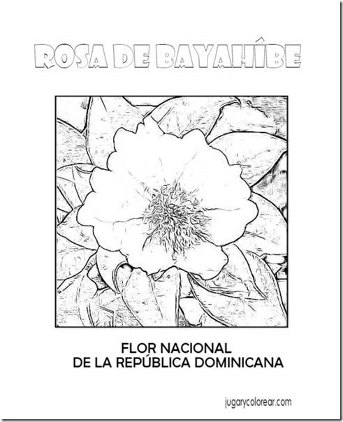 dominicana5 (2)