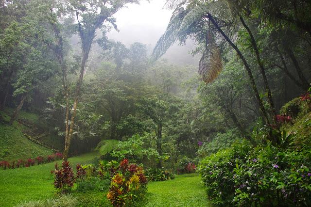 El Valle de Antón, 750 m (Coclé, Panamá), 30 octobre 2014. Photo : J.-M. Gayman