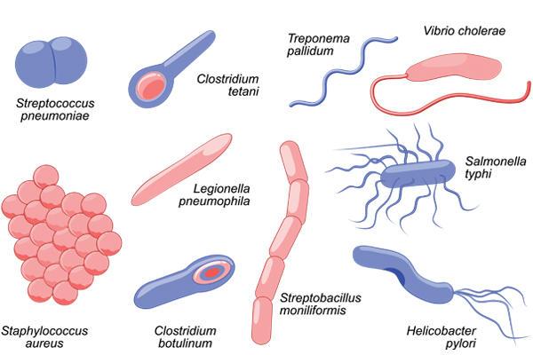 Macam-macam bakteri