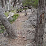 Fallen branches next to Light to Light walk (104833)