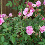 Gardening 2013 - 115_6023.JPG