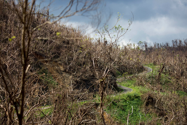 Hurricane Maria obliterated El Yunque Rain Forest on Puerto Rico, raising questions about whether it will be able to recover. Photo: Dennis M. Rivera Pichardo / The New York Times