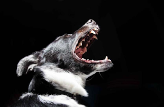 Why do dogs cry at night