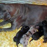 Celeste with her babies @ 1 week