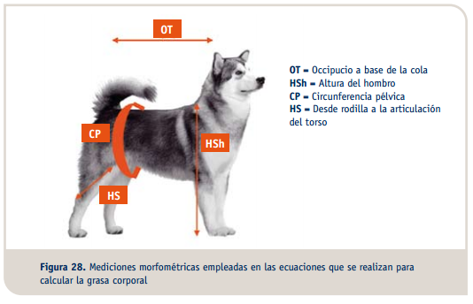 Sobrepeso y Obesidad Canina