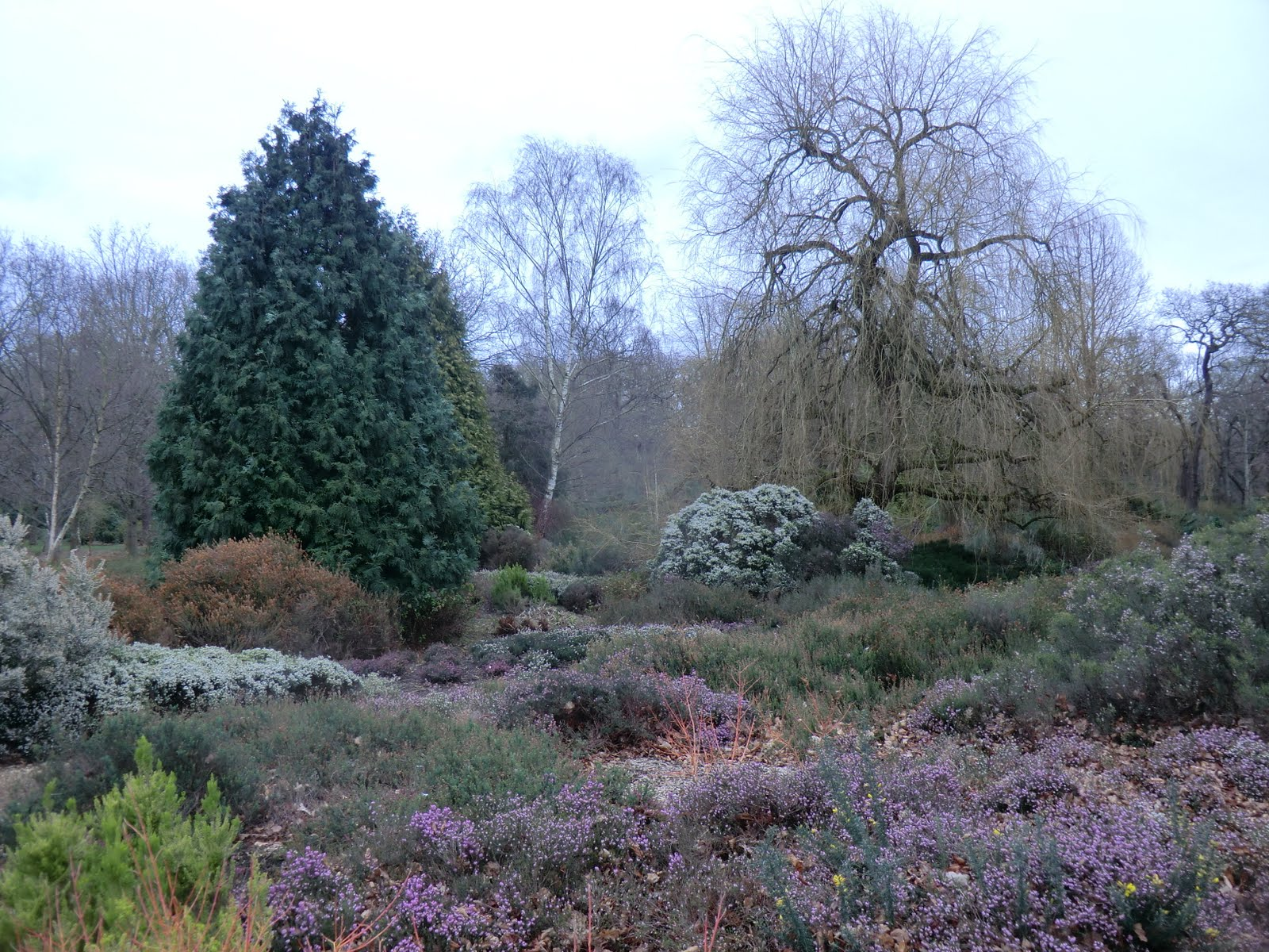 CIMG2780 Heather Garden, Isabella Plantation