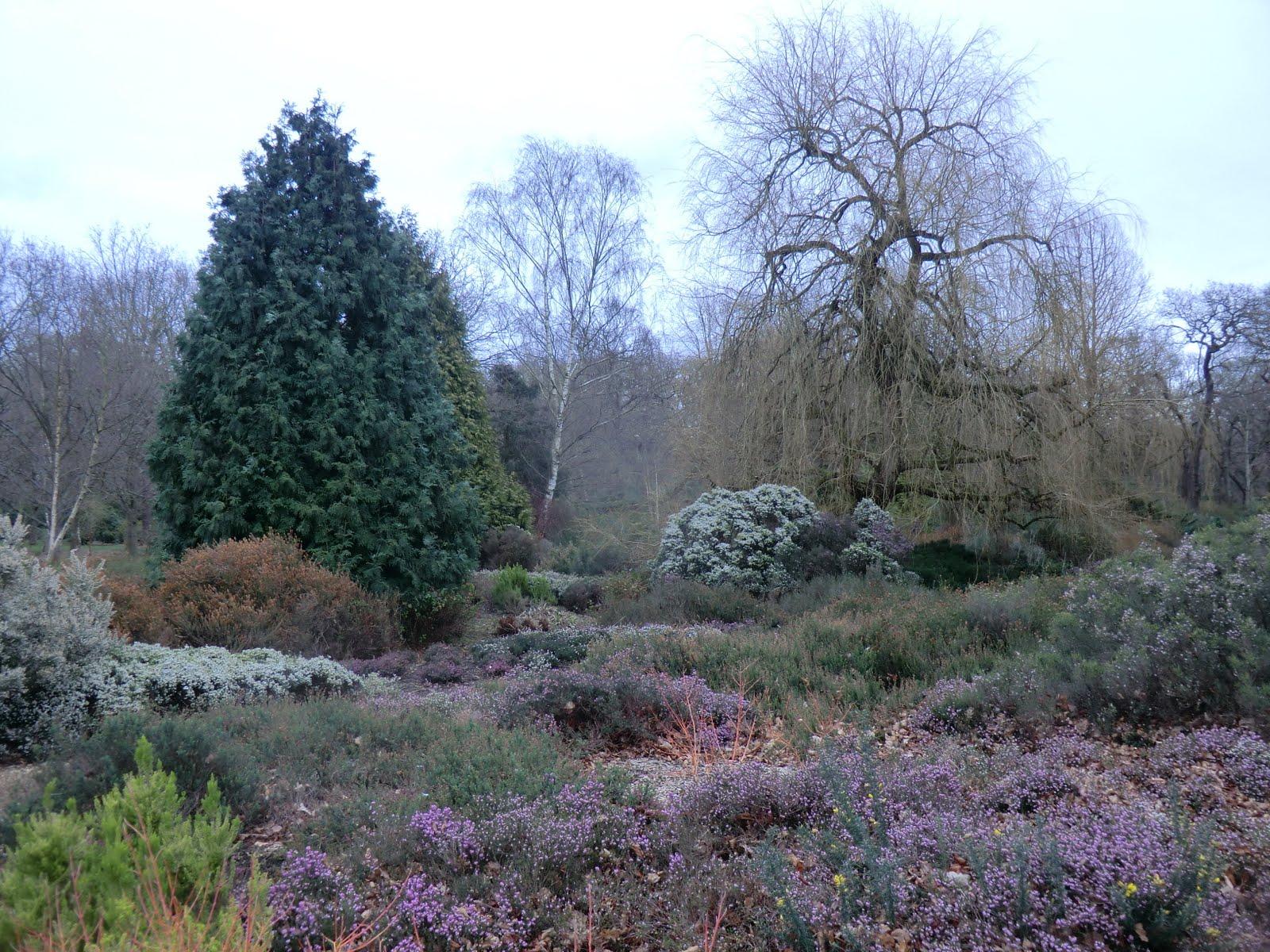 CIMG2780 Heather Garden, Isabella Plantation
