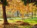 Jesień w Sosnowcu