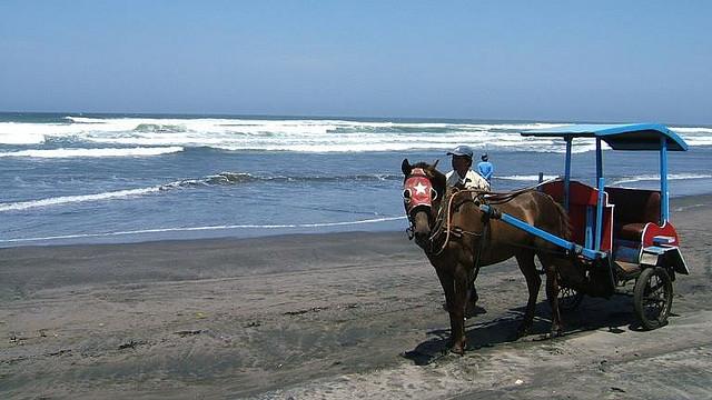 Dokar+di+Pantai+Parangtritis Pantai Parangtritis, Pantai Paling Terkenal di Yogyakarta