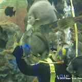 02-08-15 Corpus Christi Aquarium and USS Lexington - _IMG0516.JPG