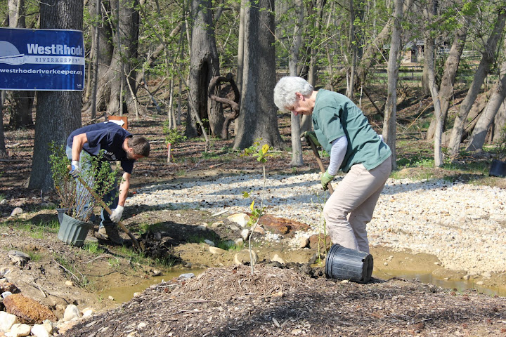 Camp Letts planting