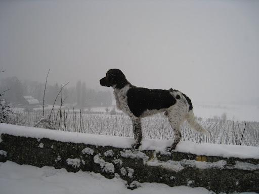 nickel eerste sneeuw (1).JPG