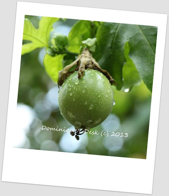 An Un-riped Fruit