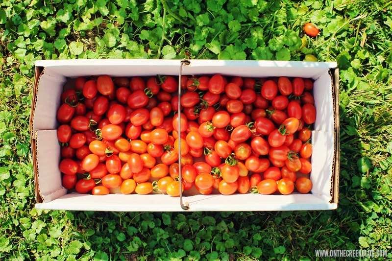 Basket of grape tomatoes