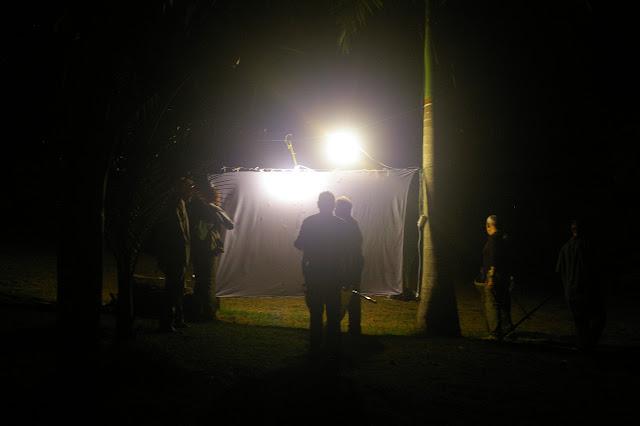 Collecte nocturne. Jardin de palmiers près de la Rivière Comté. 23 novembre 2011. Photo : J.-M. Gayman
