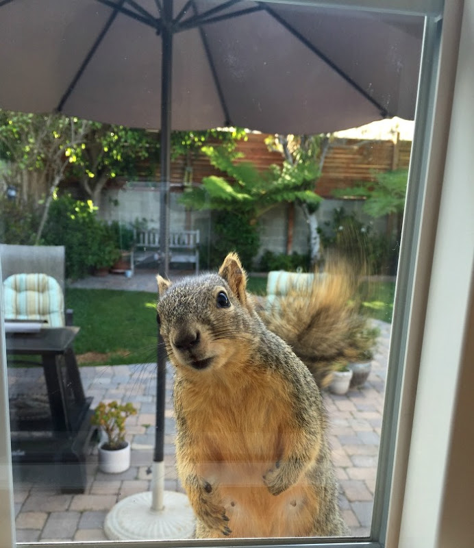 Gigi the Squirrel