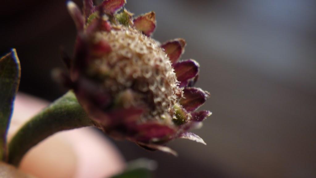 花後の様子2