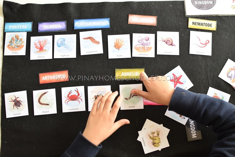 FORM YOUR ANIMAL KINGDOM CHART WITH THE MINI CARDS ACTIVITY