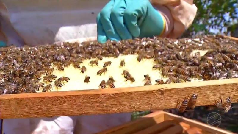 apicultura-deciolandia-5-1024x576