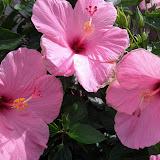 Gardening 2013 - IMG_20130526_103341.jpg