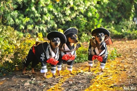 Nữ Minh Tinh Và Chàng Lãng Tử 3 - Beverly Hills Chihuahua 3: Viva La Fiesta! - Image 3