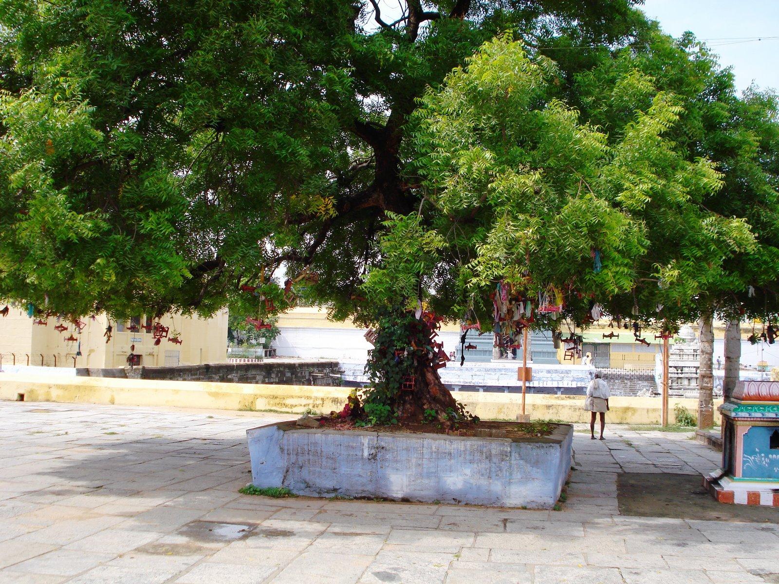 Sri Aadhi Varaha (Kalva) Perumal Temple (ThiruKalvanoor) Kanchipuram - Divya Desam 57