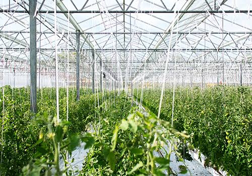Greenhouse business failed at goldenscape greenhouse Ltd.