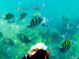 pulau harapan, 5-6 september 2015 skc 001
