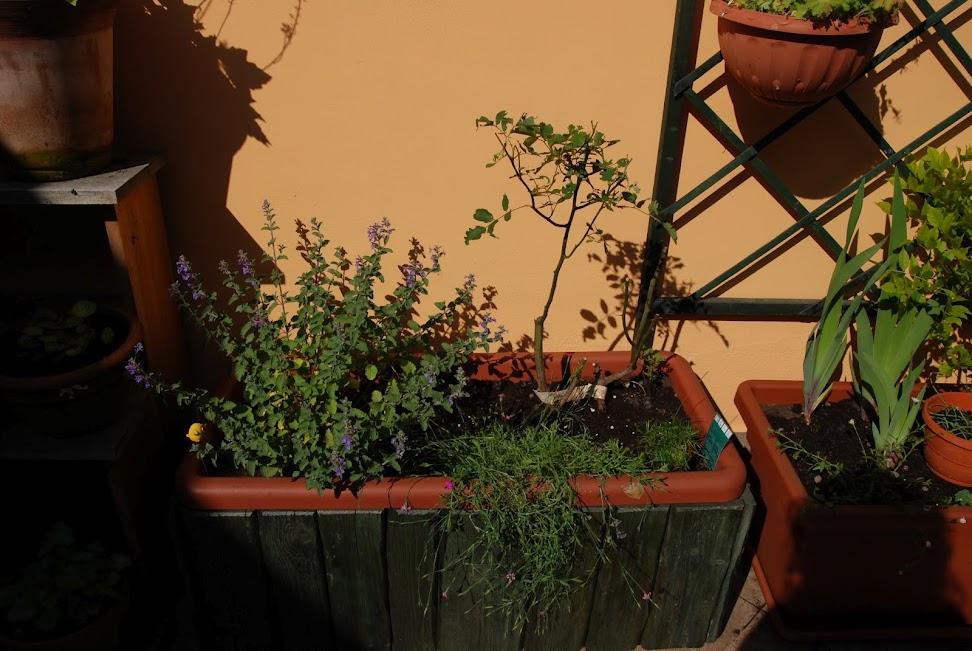 La rivoluzione di un terrazzo vercellese pagina 7 forum
