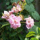 Gardening 2011 - 100_0057.JPG