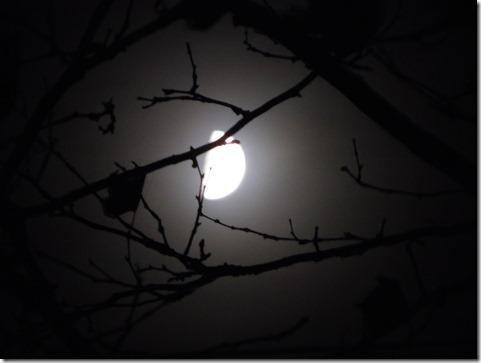 11 half moon